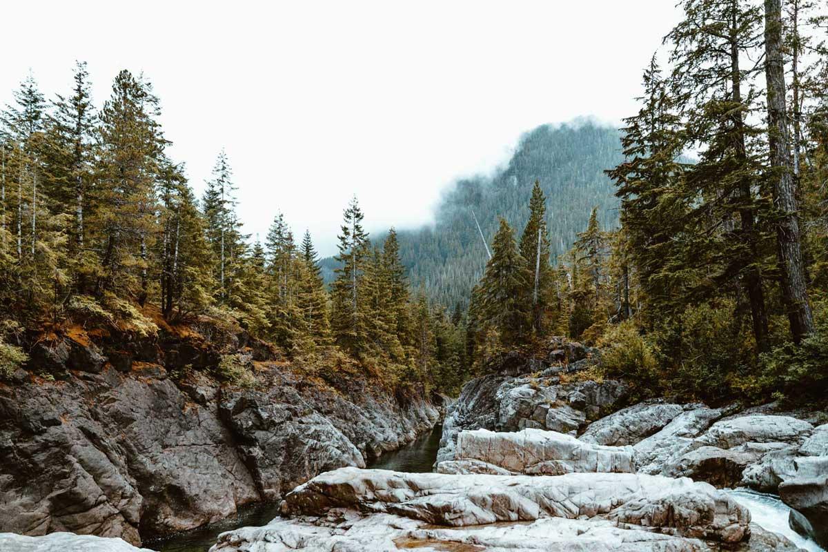 Mountain Creek through Forrest