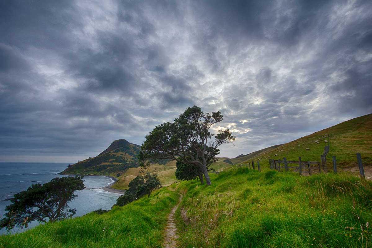 Narrow trail in New Zealand