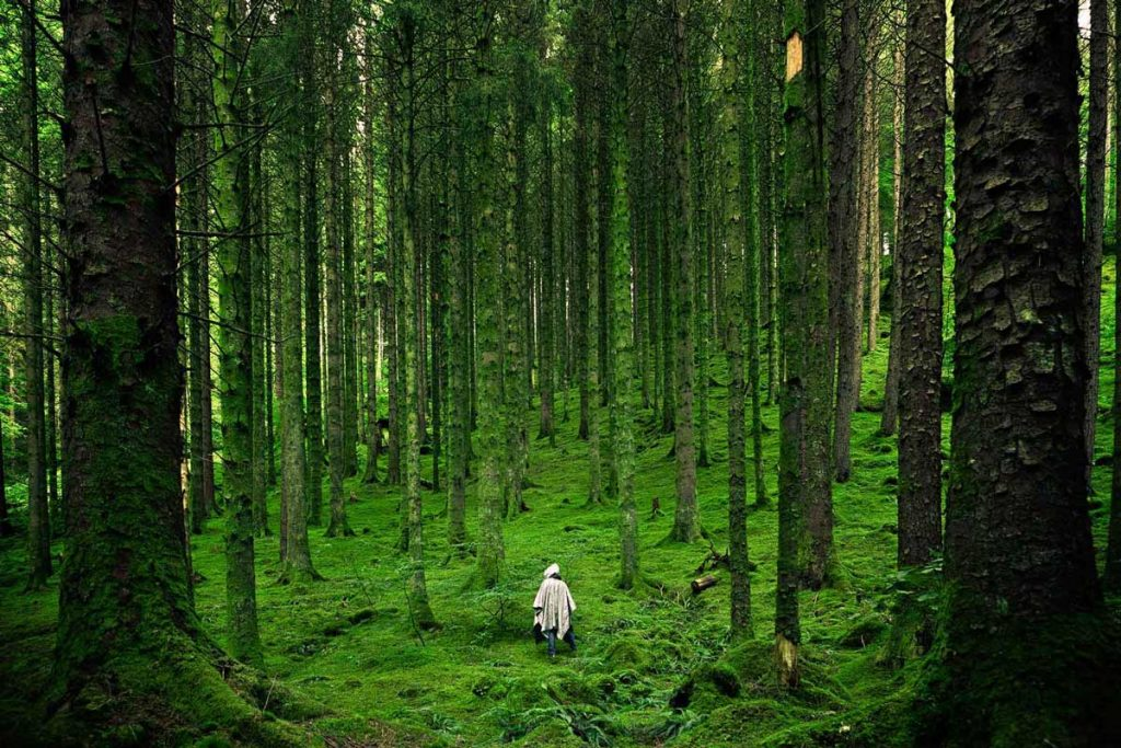 Alone hiker in a green forest