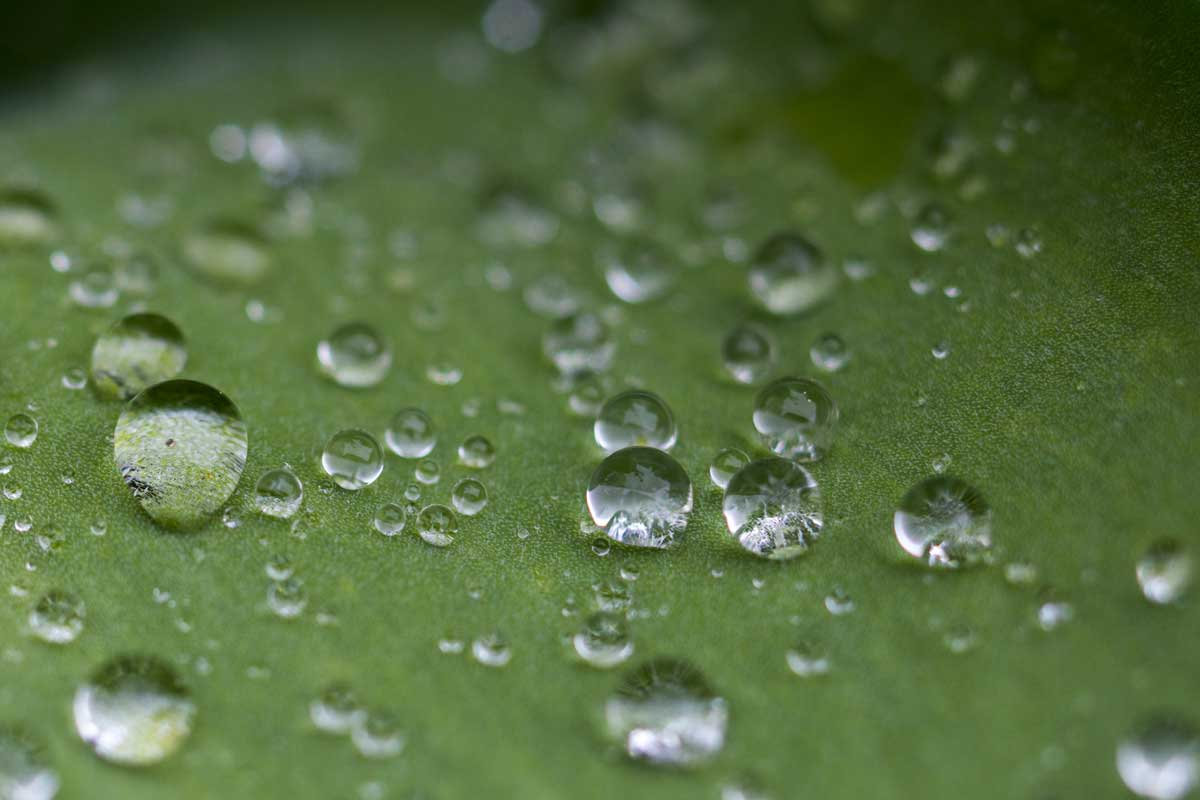 Droplets over polyester fabric